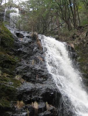 Cox's Creek Falls.