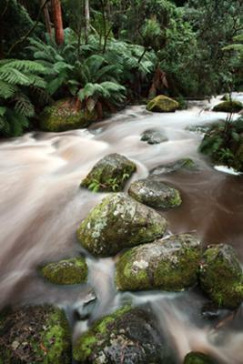 The Toorongo River just past the footbridge.
