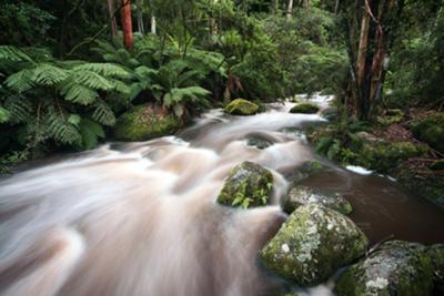 The Toorongo River just past the footbridge